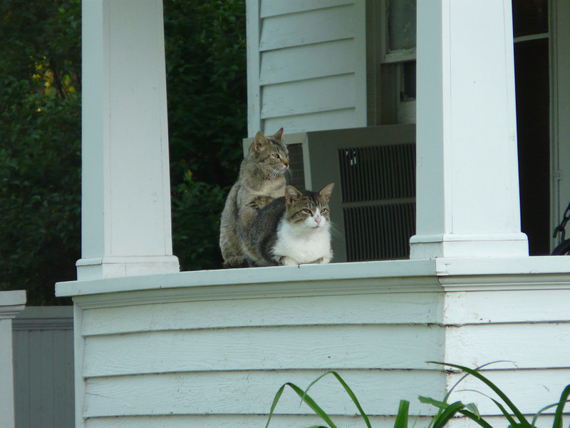 I was the first person up on Saturday (6:30!).  I think the farm cats were having some sort of private moment.