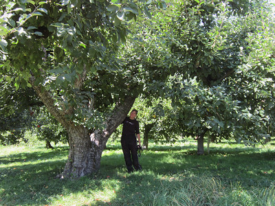 They graciously let us wander through the orchards (not regularly open to the public).  There were some very large apple trees!