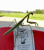 This praying mantis liked this EZ Touring cover at the motel.