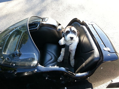 Arrow's First Ride in the Sidecar