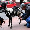 Cuenca milkman