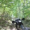 Alegan County forest trail.