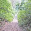 Sandy trail in Allegan County, Michigan.