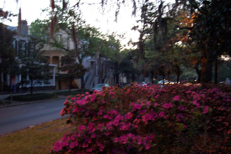 An out-of-focus shot on Liberty Street, trying to show the old houses amidst the swamp moss and azaleas