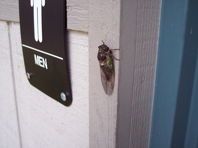BIG BUG: aka Cicada (sp?).  It was on the door to the shower house and had to be 3 inches long.  These things make a hell of a racket in the trees at night.