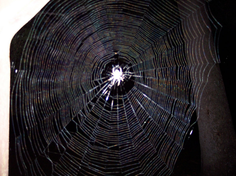 Umm its a spider....duh.    But I almost walked through it....something I seem to do a lot.