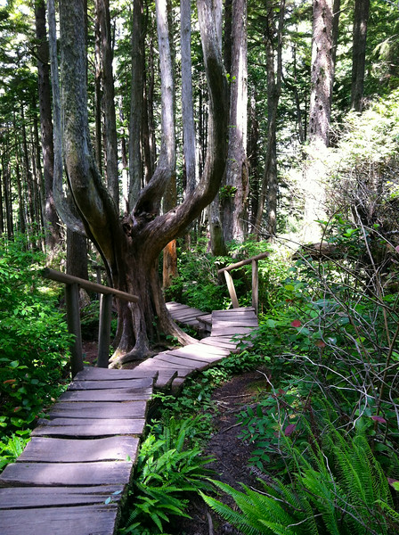 Cape Flattery Trail. If you come this far you will be rewarded.............