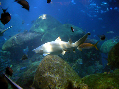 TN Aquarium BBO 08_08