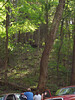 Black bear near Cades Cove loop of Smoky Mountain National Park