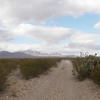 Big Bend -- Endless Vistas