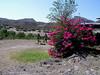 colors in bloom on the Rio Grande in November