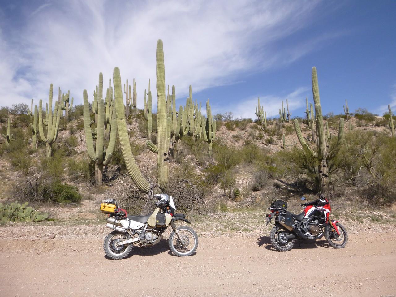 2017-03-04 TLR Mt Lemmon Ride 018