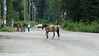 This is right by the Sealaska Inn.  Just a horse wandering around town...