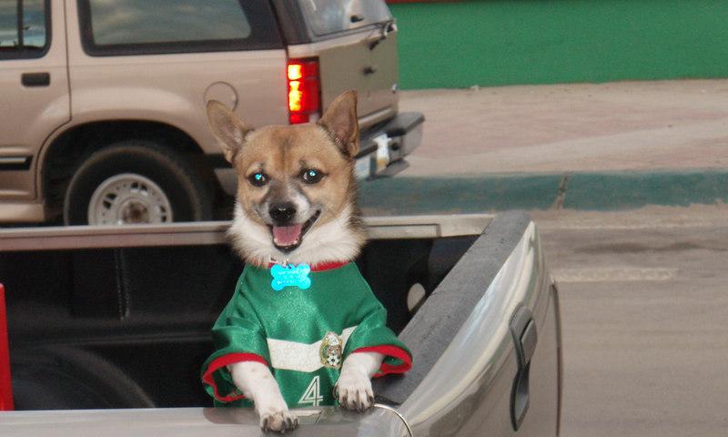 Soccer dog, San Felipe.