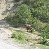 "a work'horse"" on the side of the road waiting for his owner somewhere in the mountain"