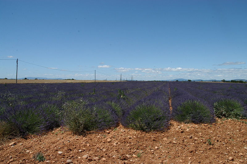 Lavender fields on the road from Valensol to Puimoisson (D56)