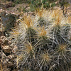 Did I mention the sharp, prickly things?