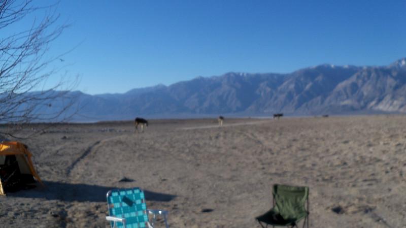 Death Valley - Saline Springs: February 2014