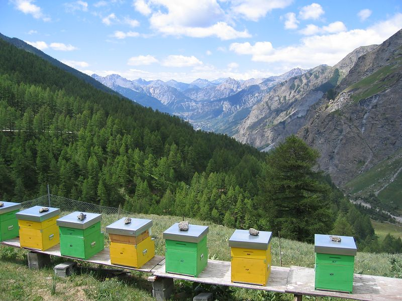 beehives on the Stella 11/07/04