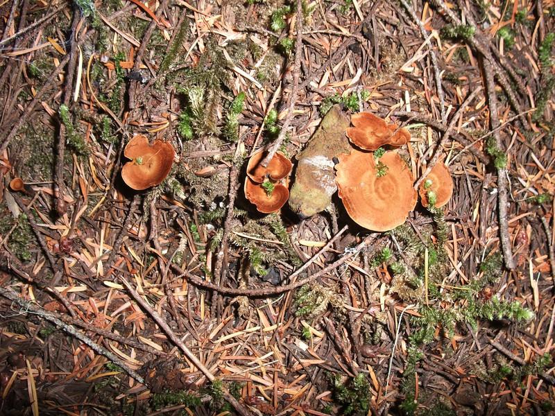 Random mushrooms.