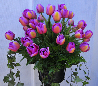 tulips and laconner 4-22-2010