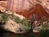 Long Canyon, Burr Trail