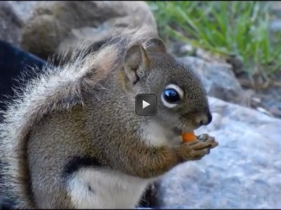 KioskSquirrel