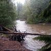 The swollen Cispus river