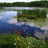Nicolet National Forest<br /> forum