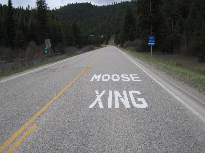 Moose zing.