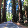 The redwoods make you feel very small.