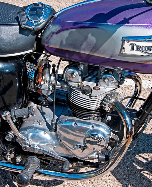 Triumph of Purple