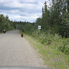 On this section I saw 7 black and 2 grizzly bears feeding on the vegetation along side the road. Suddenly I ran into this grizzly climbing out of the shrubs targeting this bicycle rider.  My guess is the biker looked more appetizing than the berries.
