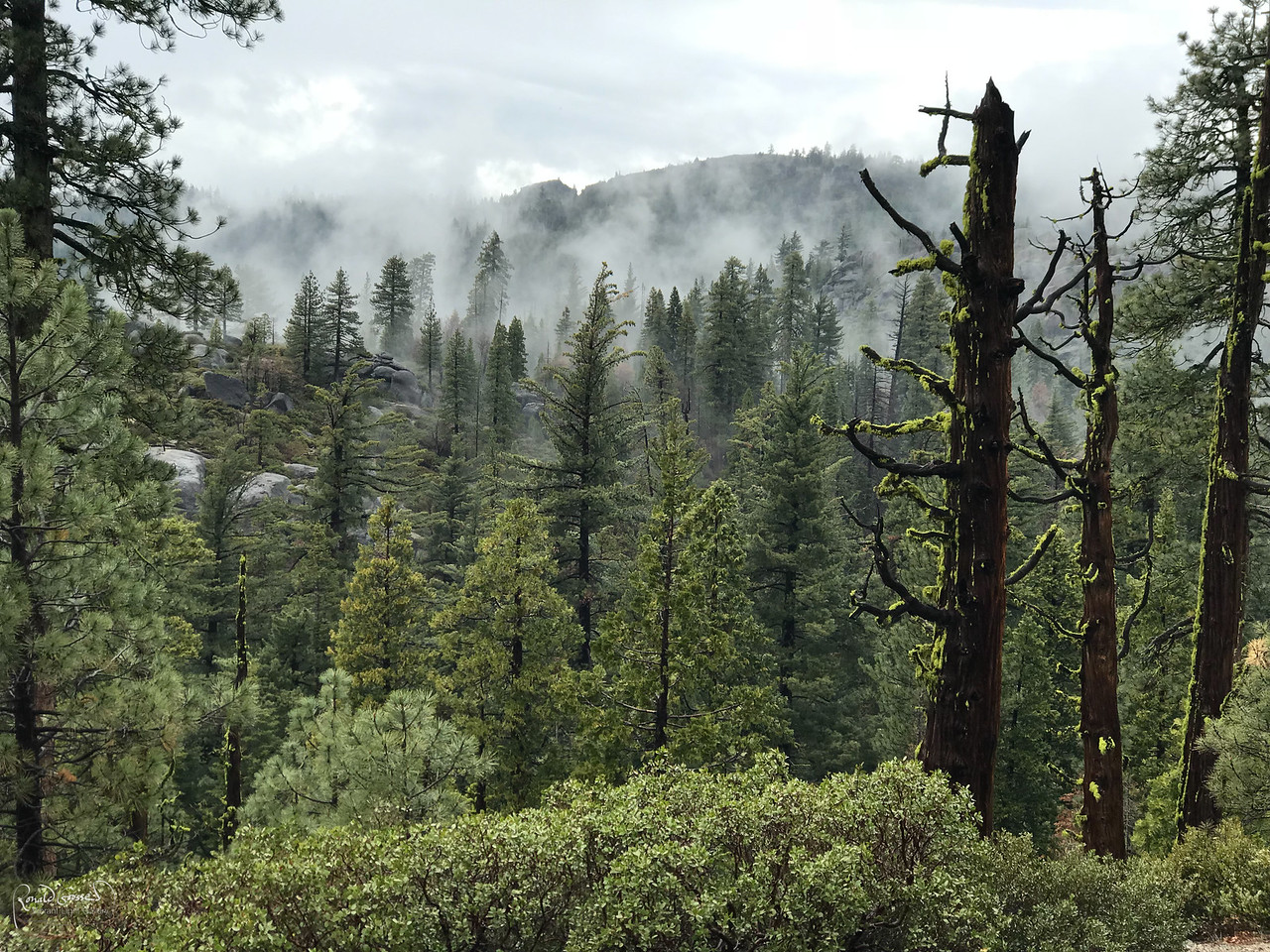 Fog and clouds over Sonora Pass