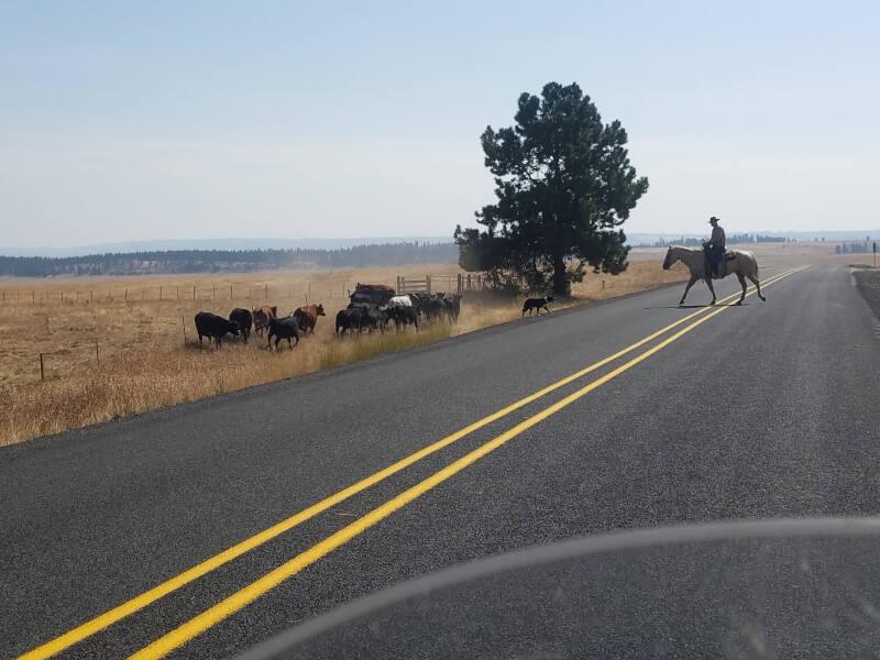 cowboys in Oregon