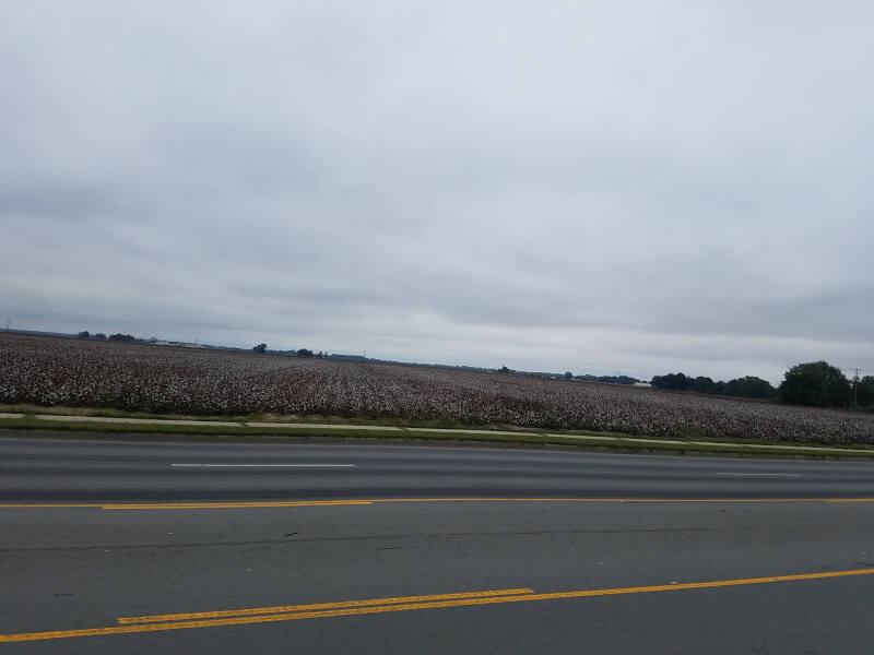 cotton fields on US 65