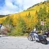 Monarch Pass Aspens 01