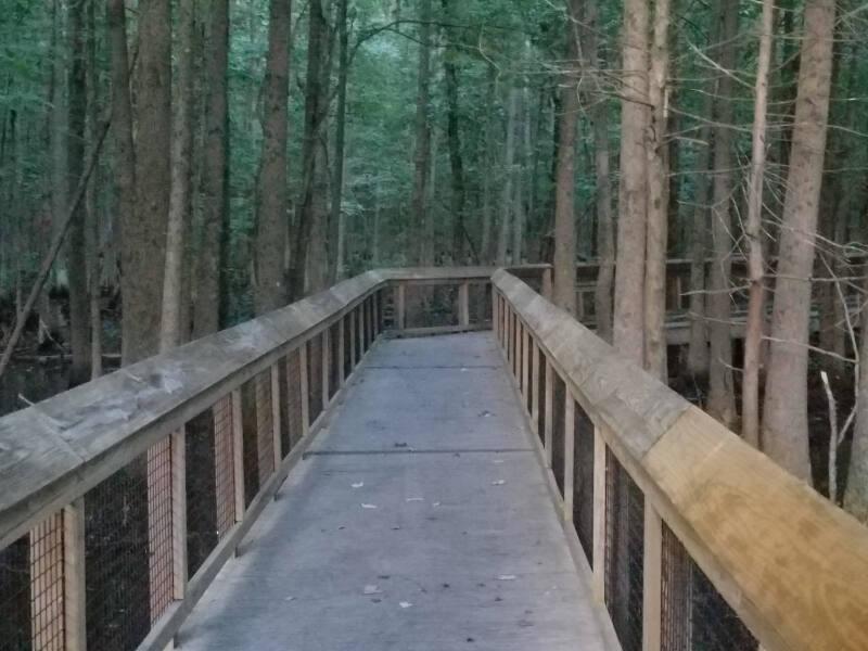 spooky boardwalk through the swamp