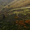 20101114_160141_NZSN4621