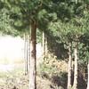 20091004_121411_HA4I7656