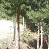 20091004_121411_HA4I7655