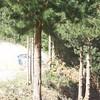 20091004_121411_HA4I7654