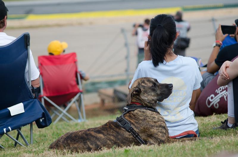 Track Dog
