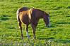 Horse in field outside circuit