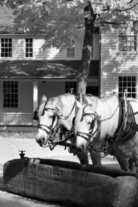 Dearborn | Horses at the Trough in Greenfield Village | Wayne County