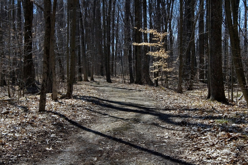 <br> <br> Early Spring in the Indian Springs Metropark <br> <br>