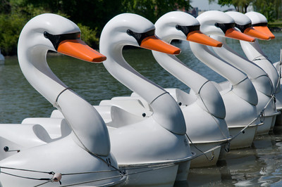 Swan Paddle Boats on Belle Isle