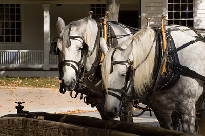 Draft Horses at the Trough in Greenfield Village