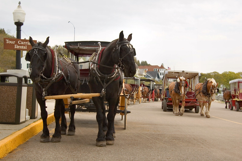 """<br> <br> Horse Taxi on Mackinac Island <br> <br> buy:<a href=""""http://www.istockphoto.com/stock-photo-3756363-horse-traffic.php"""" > digital download</a>"""