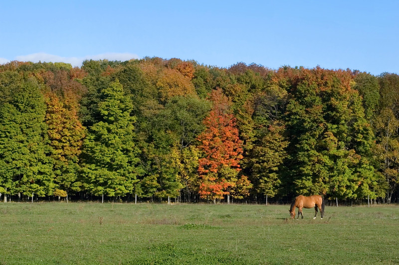 <br> <br> Grazing Horse with Fall Foliage <br> <br>